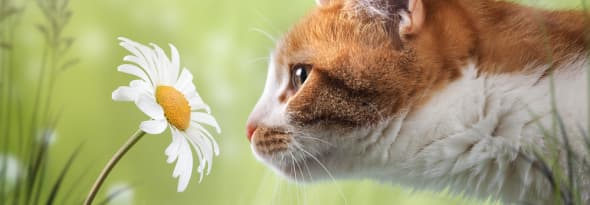 7 pet friendly flowers pet owners can have in their garden area