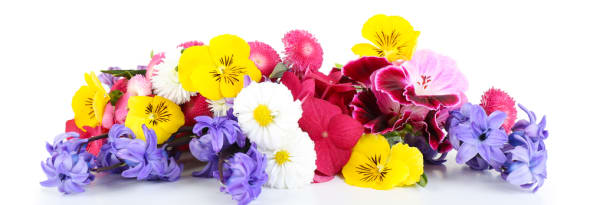What is Your Birth Month Flower? Discover It Here