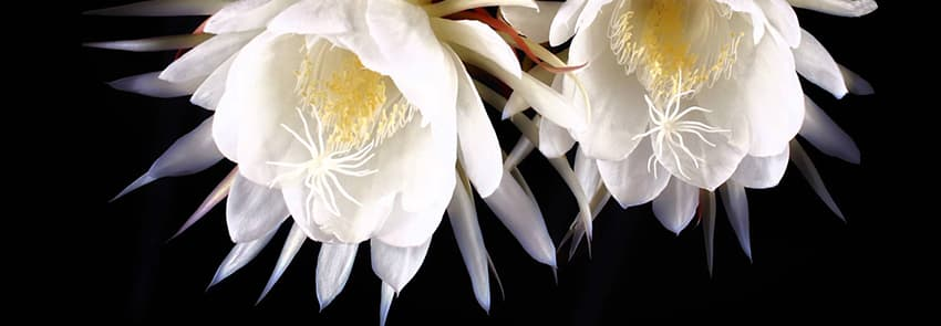 world s most expensive luxury flowers that epitomize nature s
