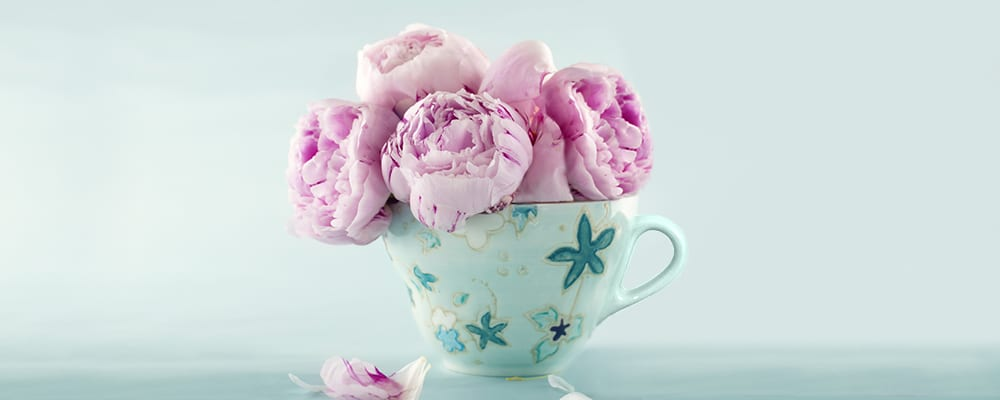Pink-Peonies-in-a-Cup