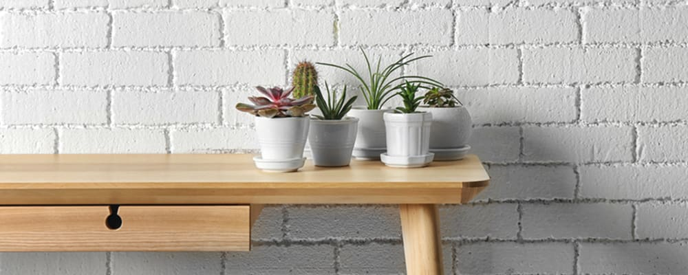 Succulents-on-Table