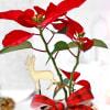 Buy Magic of Christmas in Rose Gold Vase