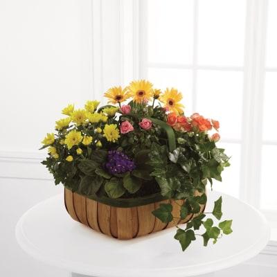 FTD Gentle Blossoms Basket
