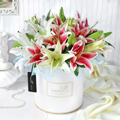 Luminous Lilies