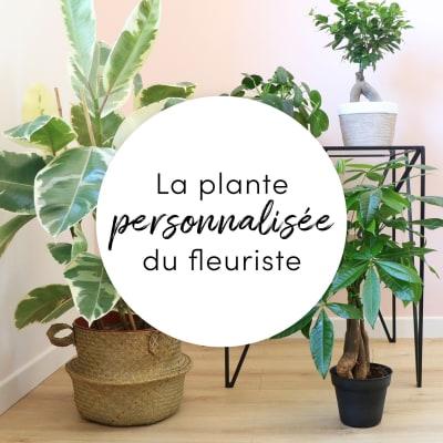 Plante du fleuriste