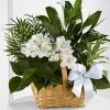 C23-4454 The FTD Peace & Serenity Dishgarden Online