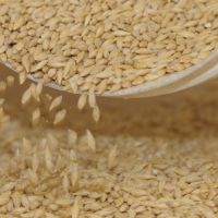 Malting Barley Evaluation Update – Banks – November 2019