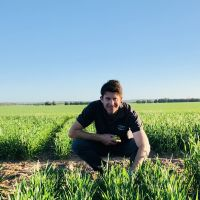 INTERGRAIN WHEATS GO HARD TO REAP REWARDS FOR GROWERS