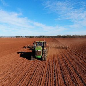 Vixen wheat – a popular choice for later sown wheat in 2020