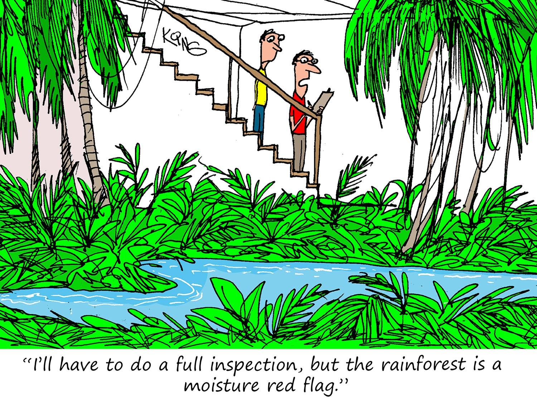 Basement Rainforest Cartoon