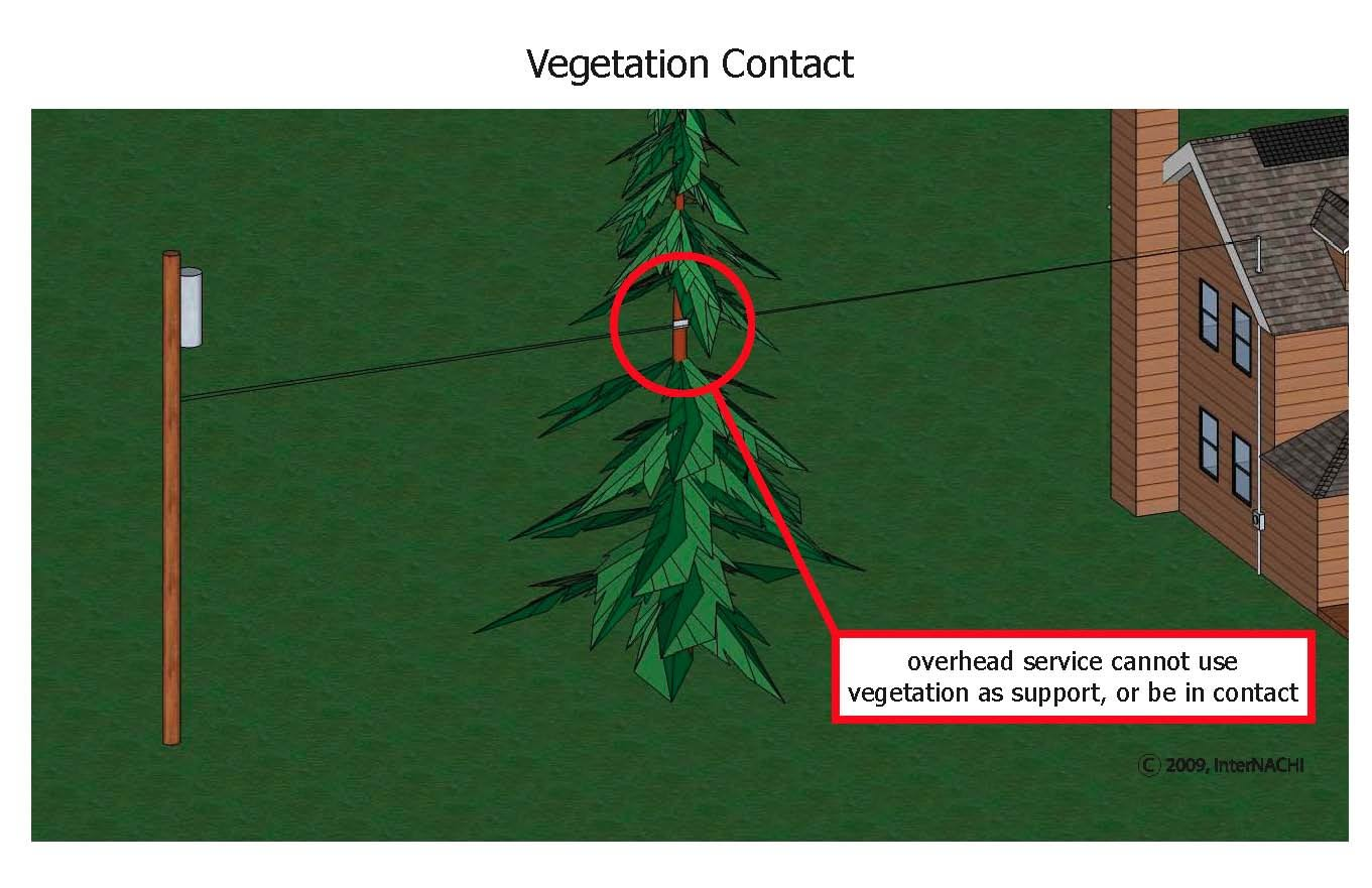 Vegetation should not contact or support electrical lines.