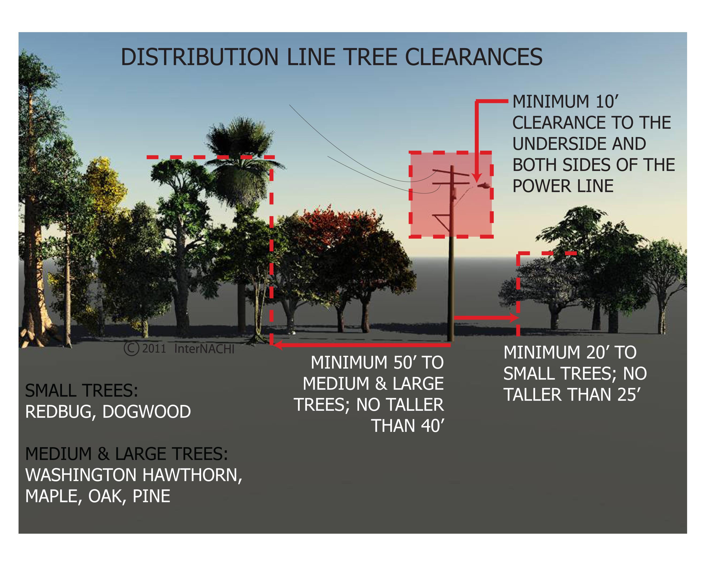 Distribution line tree clearances.