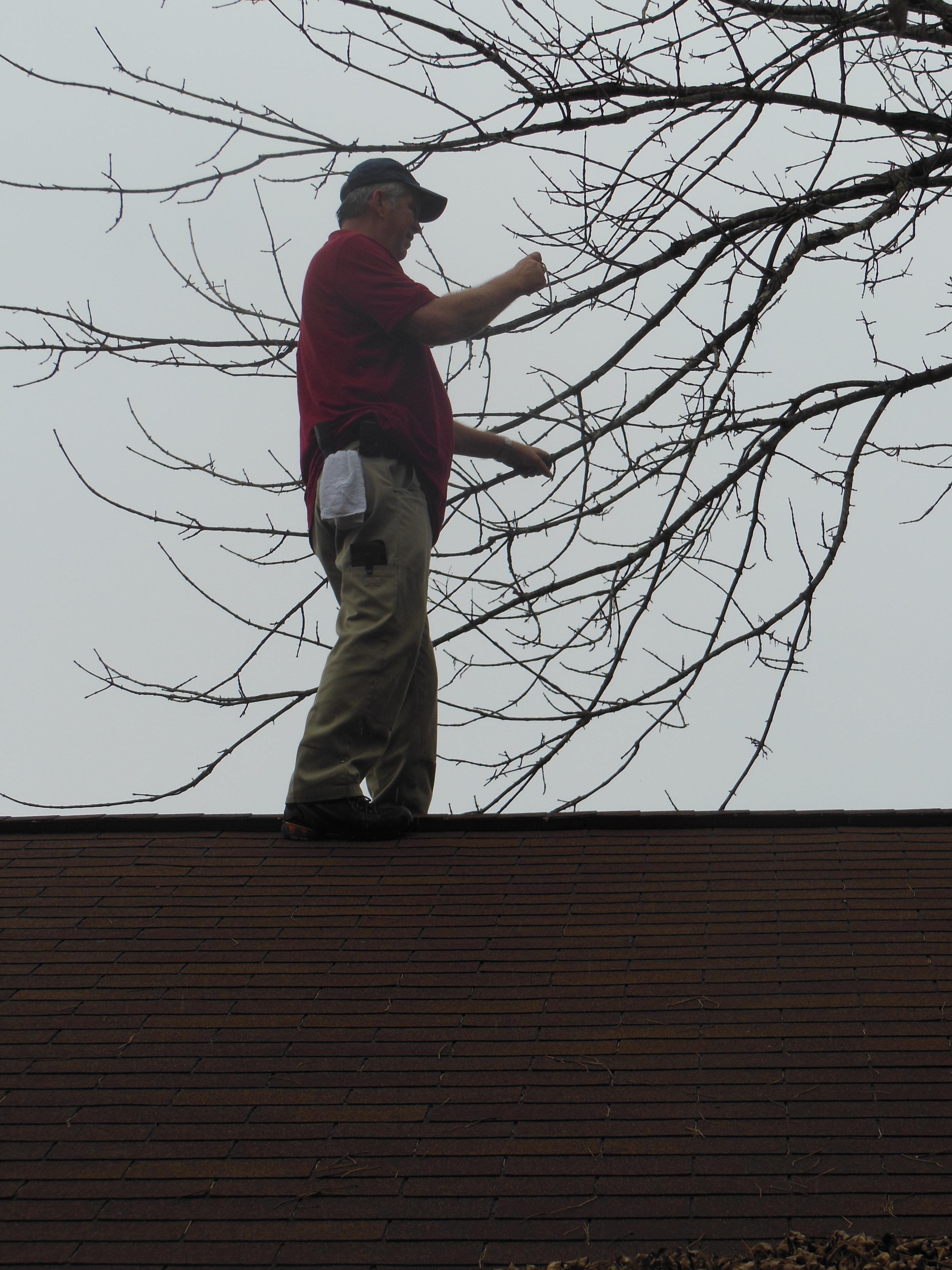 Tree inspection.