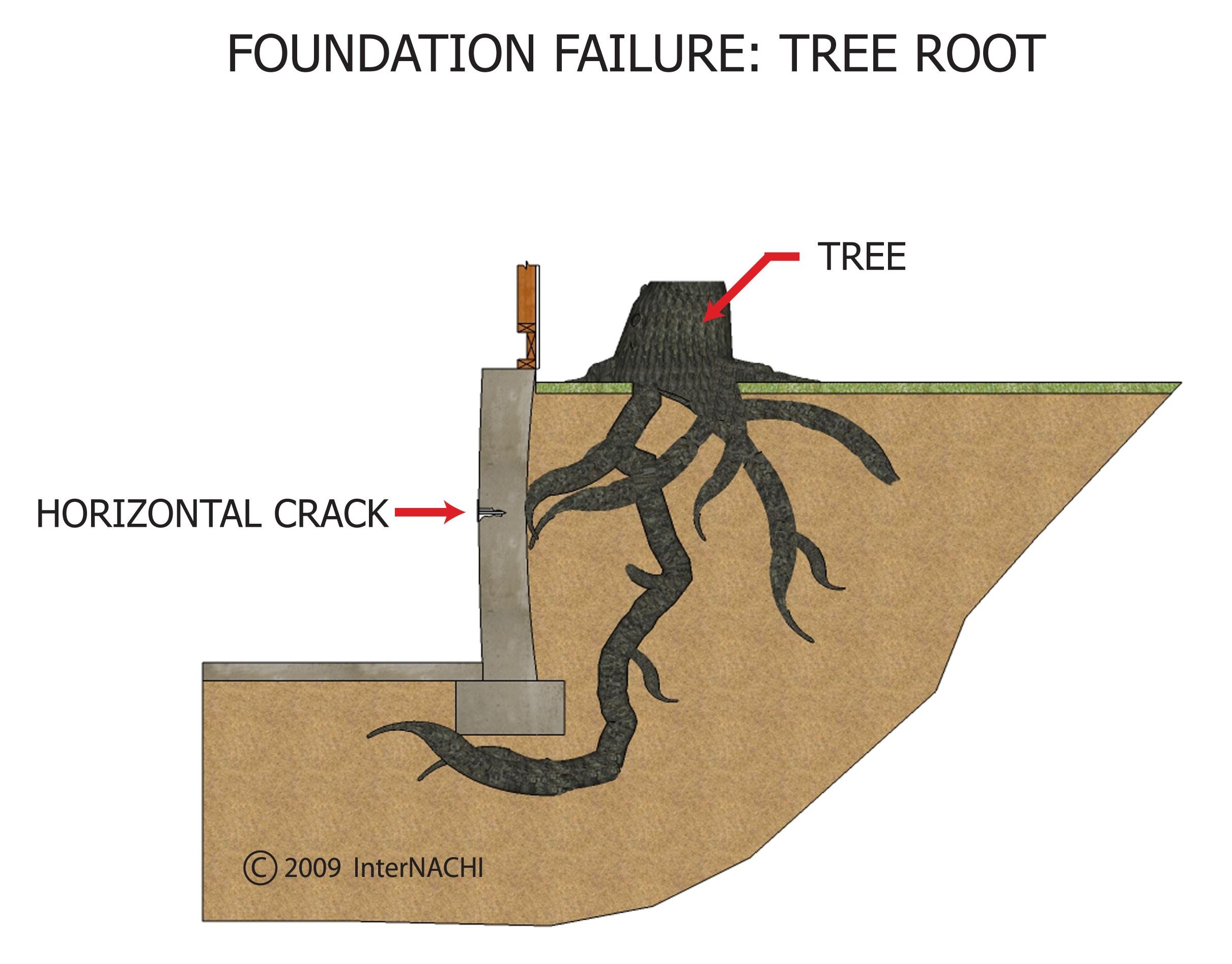 Tree root.