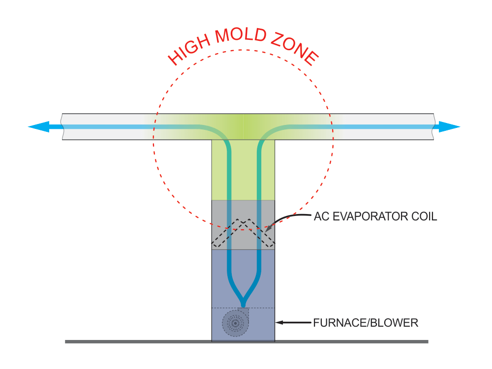 High mold zone.