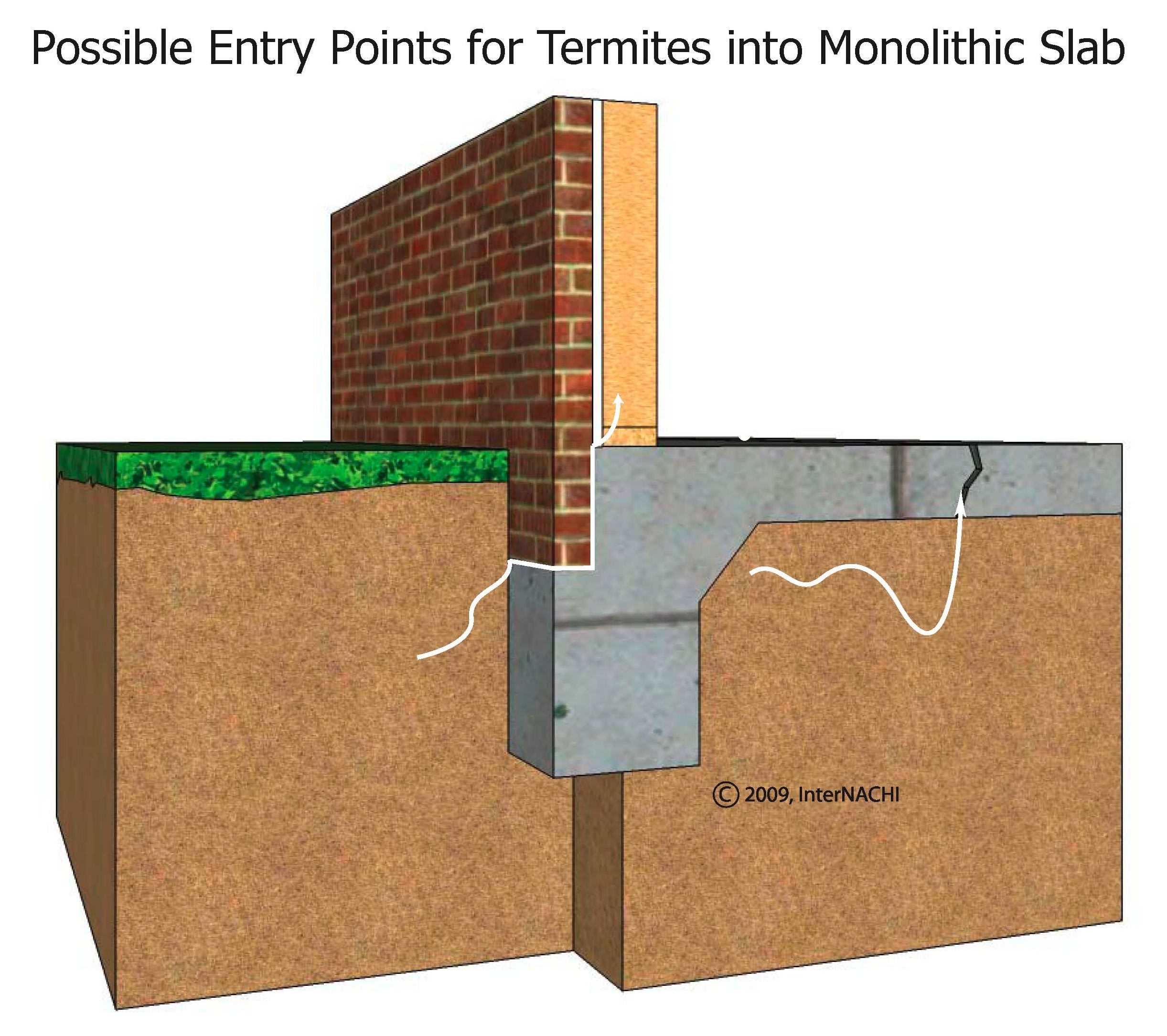 Termite entry into a monolithic slab.