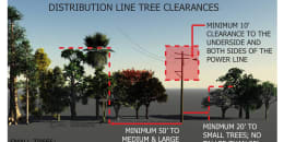 Distribution line tree clearances