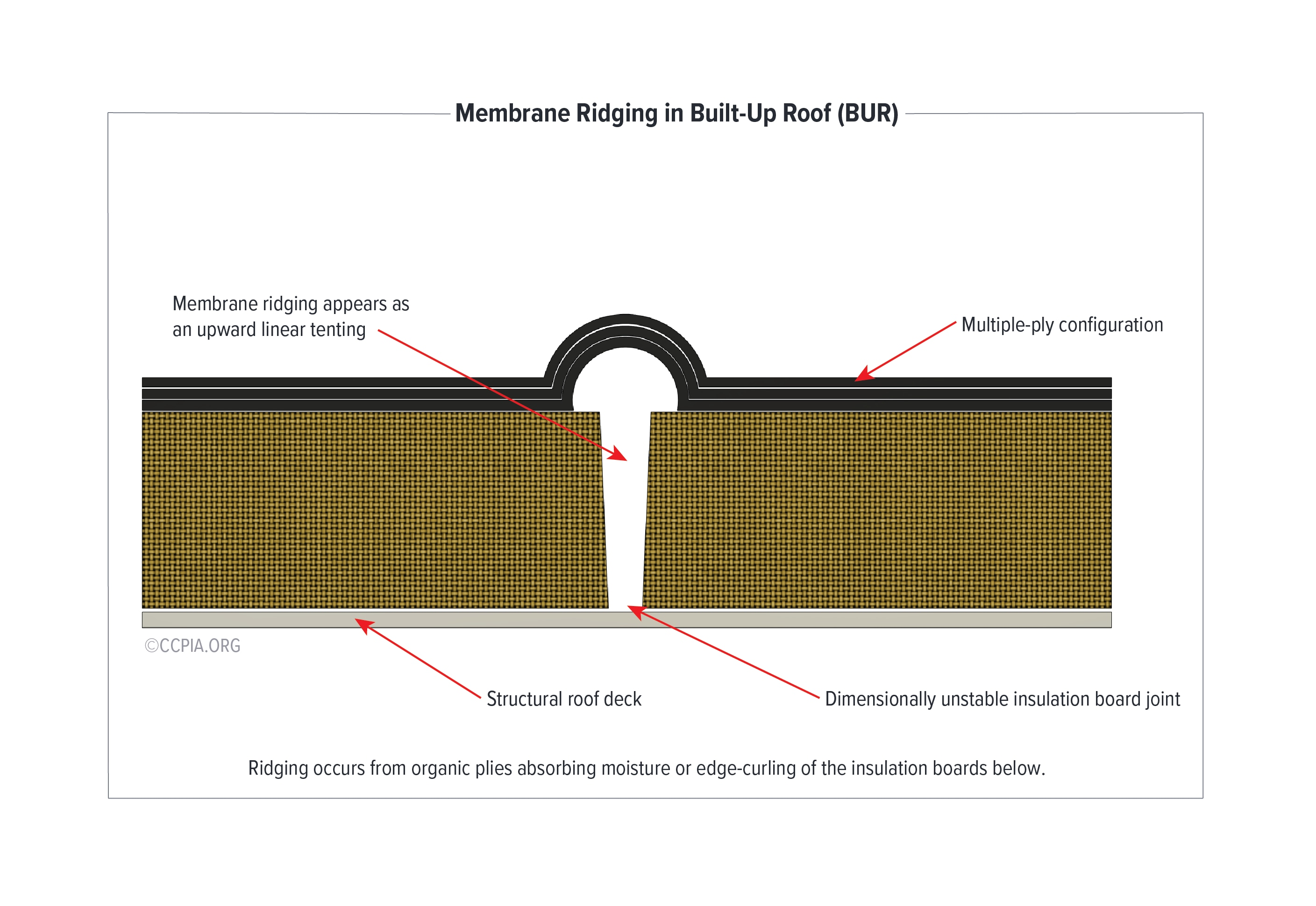 Membrane Ridging in Built-Up Roof (BUR): Ridging occurs from organic plies absorbing moisture or edge-curling of the insulation boards below.