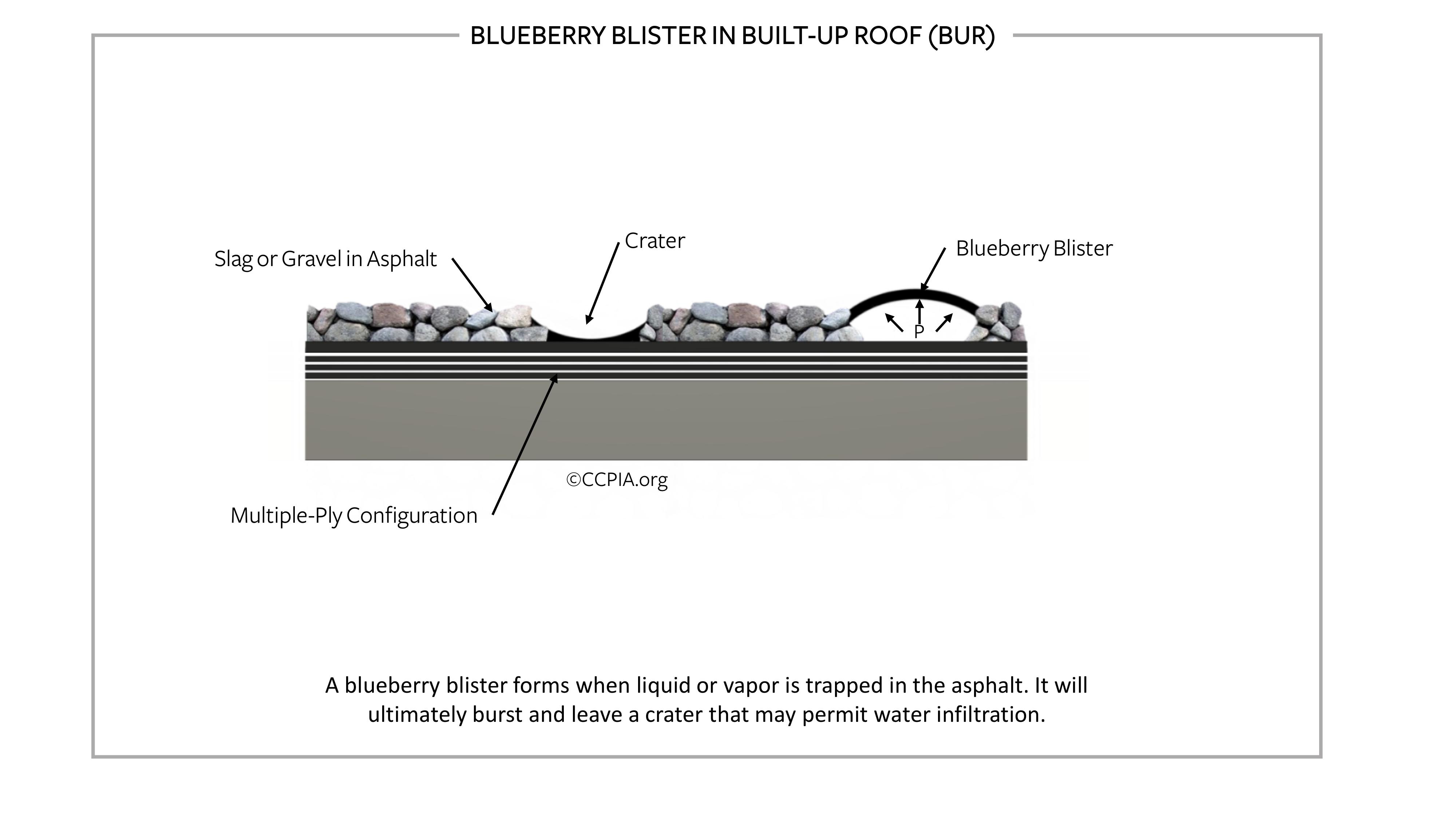 Blueberry blister in built-up roof (BUR).