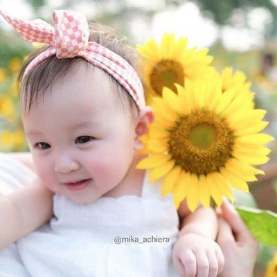 jual Bibit Bunga Matahari Kanigara IPB Store - 50 biji