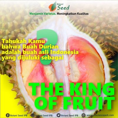jual Bibit Durian Manokwari atau Durian Pelangi - Botani Seed - IPB Store