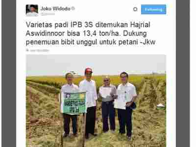 jual Benih Padi Varietas IPB 3S (LABEL UNGU) / 10KG