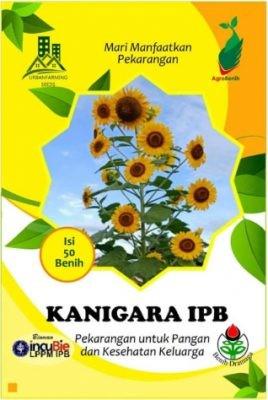 Bibit Bunga Matahari Kanigara IPB Store - 50 biji