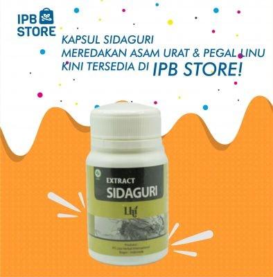 Kapsul Sidaguri Ipb Store