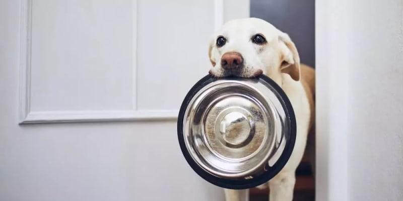 علائم نشان دهنده گرسنگی سگ چیست؟ | پرشین پت لند