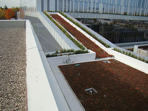 Green Roof and Live Vegitation thriving