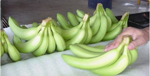 Protector de fruta