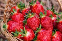 Jahody – lahodné ovoce, které prospívá zdraví