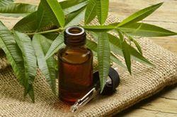 Cara Mengobati Sakit Gusi dengan Minyak Pohon Teh