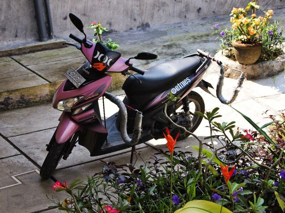 Moticos Bali