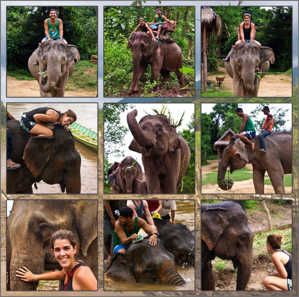 Tigres, orangutanes y... Elefantes!!!