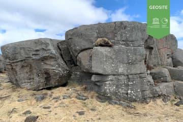 Gallow cliffs in Stafnes