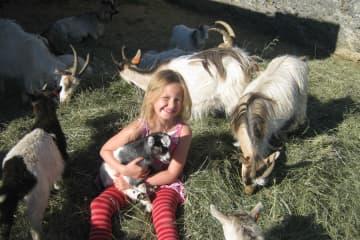 The Icelandic Goat Center Háafell
