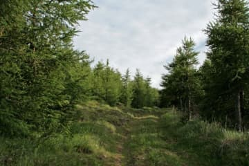 Vaglir Forest