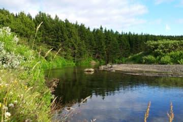 Þjórsárdalsskógur Forest