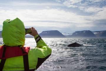 Westfjords Safari