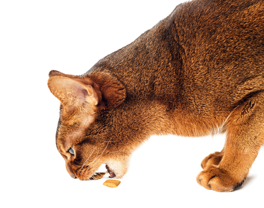 Itch Urinary for cats