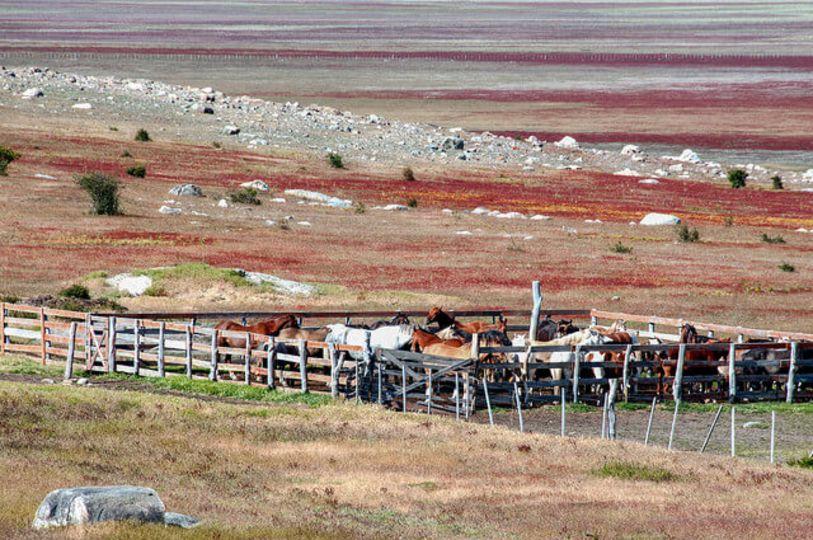 Pferderanch Farmstay
