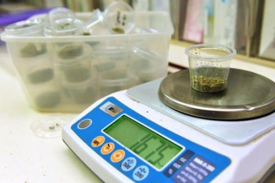 California Favors Legalizing Marijuana ChameleonsEye / Shutterstock.com