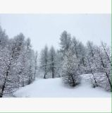 Up to 40cm of Fresh Snow Overnight in the Alps