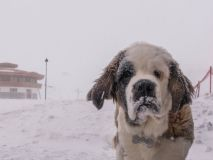 Andes Snowstorm Total Passes 50cm
