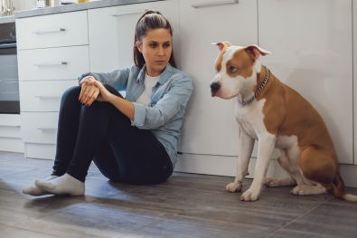 Renting with Pit Bull