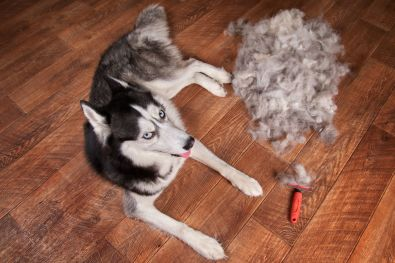 Dog's Shedding