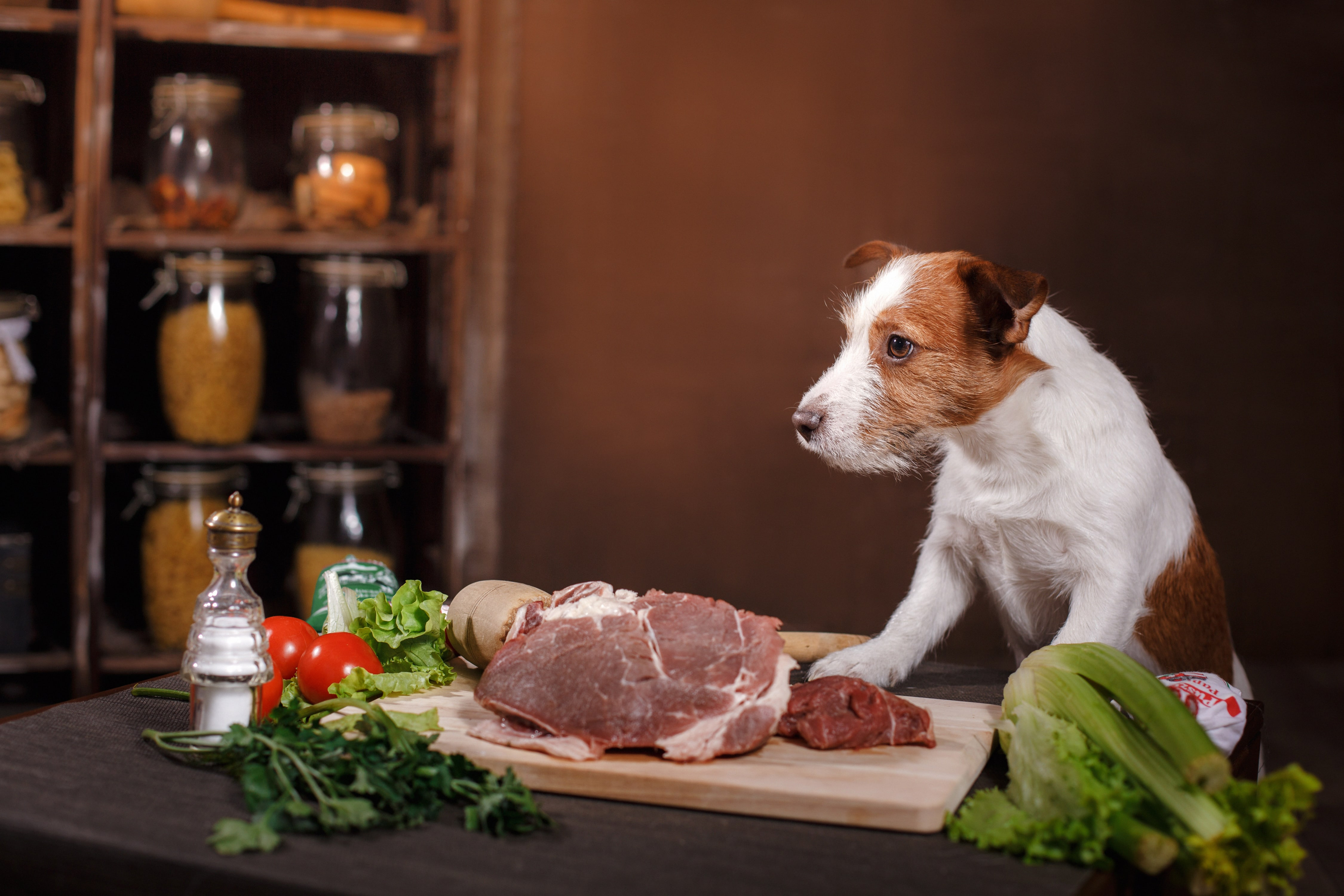 Dog's Harmful Foods