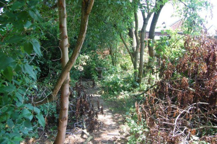 184 Main Road garden