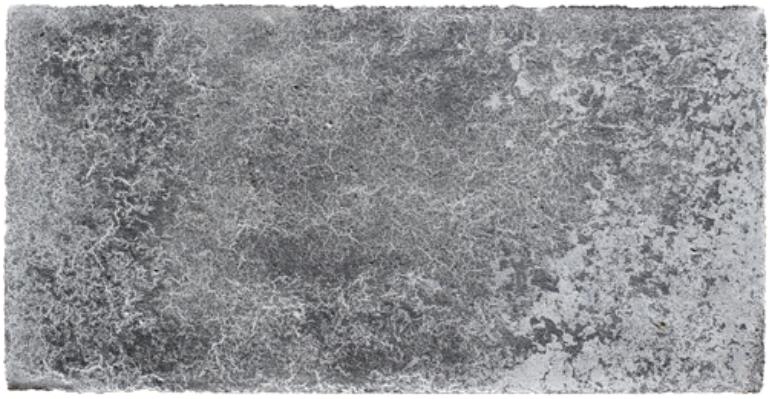 Concrete Organism